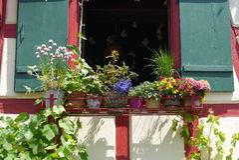 Desing καλοκαίρι άνοιξη κήπων λουλουδιών Στοκ Εικόνα