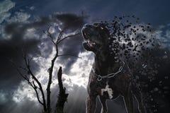 Desintegratie van hond Stock Foto's