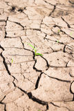 The desire for life. A plant out of a dry ground Stock Photo