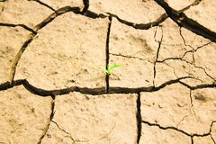 The desire for life. A plant out of a dry ground Stock Images