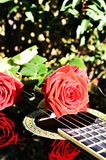 Desire for love. Roses on the strings of a guitar, with beautiful reflections on the object, suggesting love for music and joy royalty free stock photography