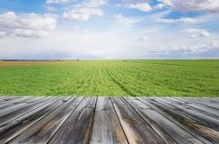 Desk of free space for your decoration with fresh green cultivated field and blue sky.  royalty free stock image