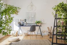 Desk and a wooden chair in a sunlit workspace interior for an il. Lustrator with drawings, plants and white walls royalty free stock photo
