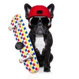 Deskorolka łyżwiarki pies Zdjęcia Royalty Free