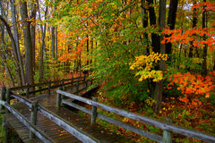 Deskowy spacer przez jesieni drzew Fotografia Stock