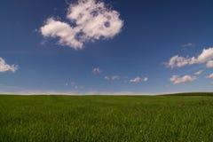 Desktop wallpaper Pasture field sky. Pasture field sky blue desktop wallpaper royalty free stock images