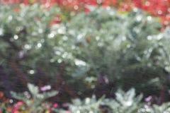 Deslúmbrese en los círculos que empañan, bokeh defocused de los rayos de sol Textura del rojo y del verde, fondo Imagen de archivo libre de regalías