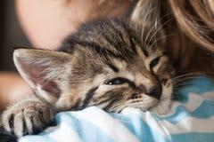 Deslizamento do gatinho no ombro do menino fora Foto de Stock Royalty Free