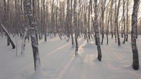 Deslizamento entre árvores de vidoeiro no parque coberto de neve no dia de inverno vídeos de arquivo
