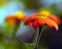 Deslumbramiento anaranjado Fotografía de archivo