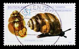Desmoulin`s Whorl Snail Vertigo moulinsiana, Endangered Animals serie, circa 2002. MOSCOW, RUSSIA - OCTOBER 21, 2017: A stamp printed in German Federal Republic Stock Image