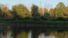 Desna-Fluss mit Waldvogelperspektive Sonnenuntergang stock video footage