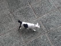Desnate o gato foto de stock royalty free
