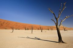 Desolate Desert Stock Images
