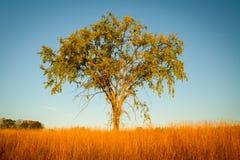 Desolate l'albero Fotografia Stock Libera da Diritti