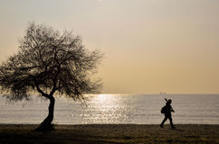 Desolate man and alone Trees. A man walking alone in the deserted seaside Royalty Free Stock Photos