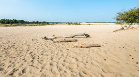 Desolate sandy landscape in the summer season Royalty Free Stock Images
