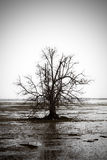 Desolate Tree. Black and white desolate tree Stock Photography