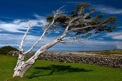 Desolate tree in Irish landscape Royalty Free Stock Images