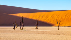 Desolated dry landscpe and dead camel thorn trees in Deadvlei pan with cracked soil in the middle of Namib Desert red Royalty Free Stock Images