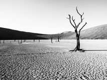 Desolated dry landscpe with dead camel thorn trees in Deadvlei pan. Cracked soil in the middle of Namib Desert red dunes Royalty Free Stock Images