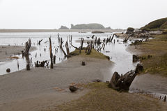Desolated landscape at Chiloe national park. Desolated landscape at Chiloe national park, Chile Stock Photo