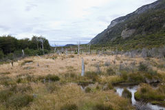 Desolated landscape at tierra del fuego. National park. Argentina Royalty Free Stock Photography