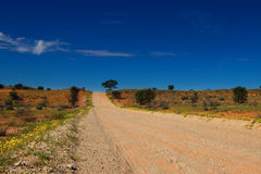 Desolated road through the kalahari dunes with yellow flowers Royalty Free Stock Image