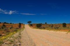 Desolated road through the kalahari dunes with yellow flowers royalty free stock image