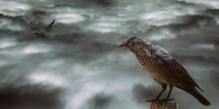 Desolated sky and balck bird Stock Images