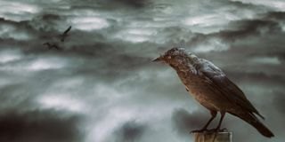 Desolated sky and balck bird. A black bird in watching desolated sky stock images