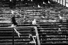 Desolated Stalowy budowy molo Na nadmorski Zdjęcia Stock