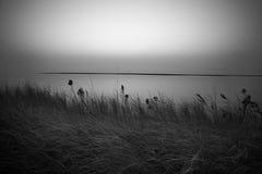 Desolation Stock Images