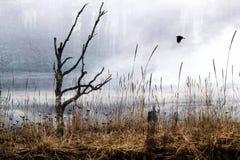 desolation Стоковая Фотография