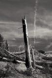 Desolato Immagini Stock
