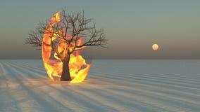 Despeça o burning em torno da árvore no deserto Foto de Stock