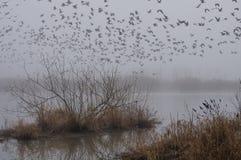 Despegue de niebla Imágenes de archivo libres de regalías