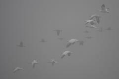 Despegue de niebla Fotos de archivo