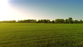 Despegue sobre campo verde grande por la tarde metrajes