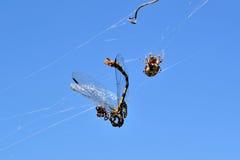 Despensa de la araña Foto de archivo libre de regalías