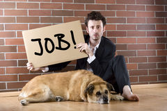 Desperate businessman pleads with sign. Desperate businessman sits with a dog on the floor and holds a Need Job sign Stock Photo