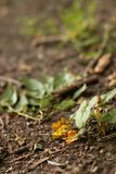 Desperdício na terra na natureza, poluição ambiental foto de stock