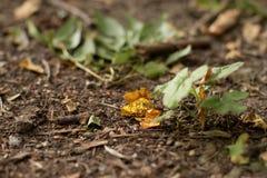 Desperdício na terra na natureza, poluição ambiental foto de stock royalty free