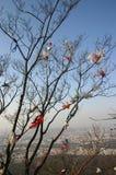Desperdicios o basura en árbol Foto de archivo libre de regalías