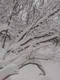 Despertó a una tierra de la maravilla del invierno Imágenes de archivo libres de regalías