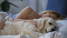 Despertar de espera do cão paciente do proprietário da mulher vídeos de arquivo