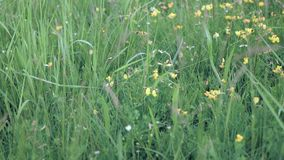 Desplazamiento sobre hierba y wildflowers almacen de metraje de vídeo