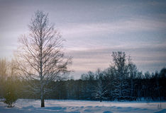 Despondency. Middle of Winter in Russia Royalty Free Stock Photo