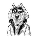 Desportista do cão nos vidros e no revestimento Gravura preta do vintage Fotos de Stock Royalty Free