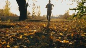 Desportista irreconhecível que corre no parque do outono que pisa nas folhas caídas cor Treinamento masculino do atleta exterior  video estoque